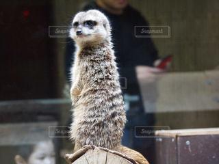 動物の写真・画像素材[353951]