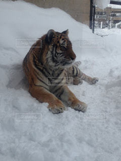 No.359010 雪