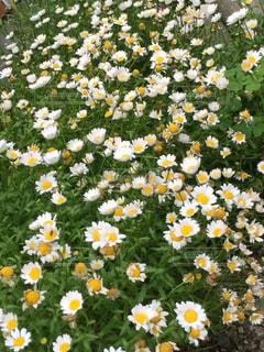 近くの花のアップ - No.1195025