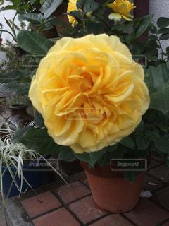 テーブルの上の花の花瓶 - No.1195029