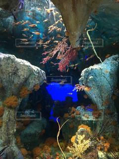 魚の写真・画像素材[354630]