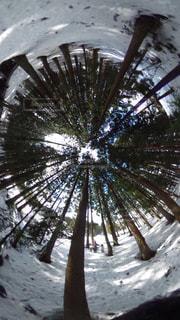 No.354990 森林