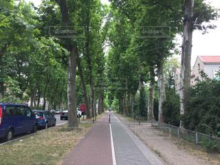 ドイツ・ベルリンの並木道の写真・画像素材[1249253]