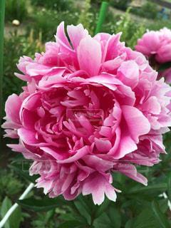 花の写真・画像素材[385193]