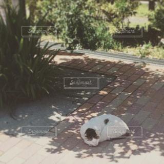 猫の写真・画像素材[354584]