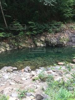 近くに池のアップの写真・画像素材[1621430]