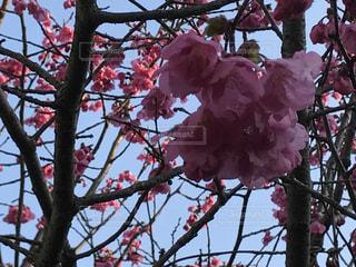 春の写真・画像素材[416368]