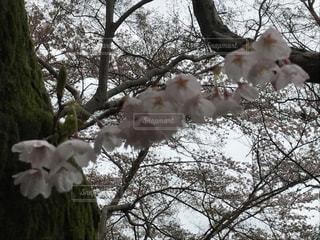 花の写真・画像素材[422962]