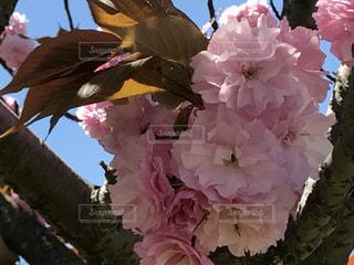 花の写真・画像素材[445426]