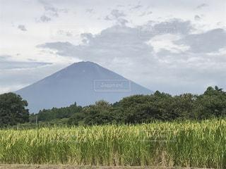 富士山と稲穂の写真・画像素材[759941]