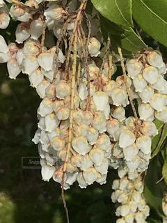 花の写真・画像素材[1081472]
