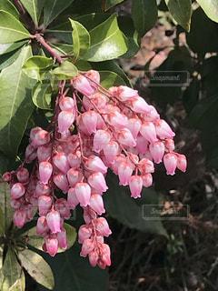 花の写真・画像素材[1081473]
