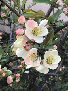 花の写真・画像素材[1086587]