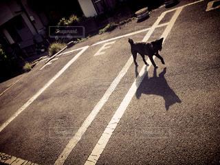 No.360560 犬