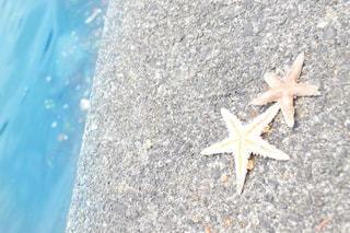 海の写真・画像素材[442355]