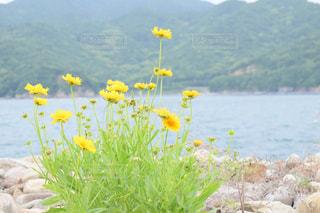 自然の写真・画像素材[447224]