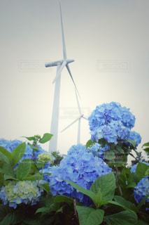 自然の写真・画像素材[451996]