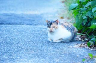 猫の写真・画像素材[477779]