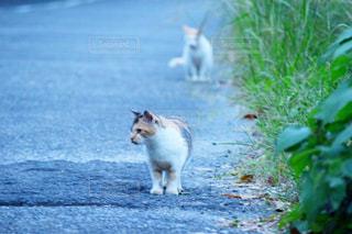 猫の写真・画像素材[477780]