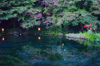 水の体の横にあるツリー - No.1154640