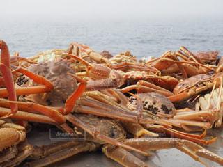 蟹の写真・画像素材[354930]