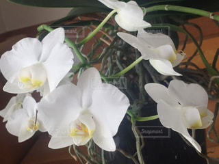 花の写真・画像素材[364027]