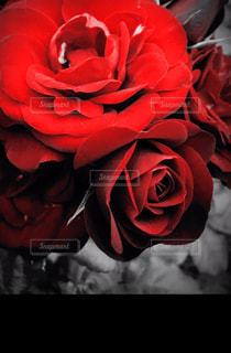 近くの花のアップの写真・画像素材[726816]