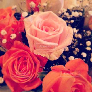 花の写真・画像素材[362085]