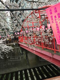 桜 - No.355266