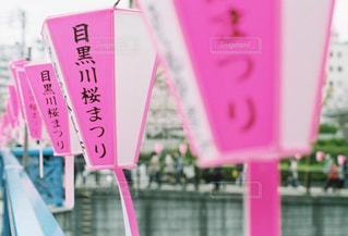 桜 - No.355267