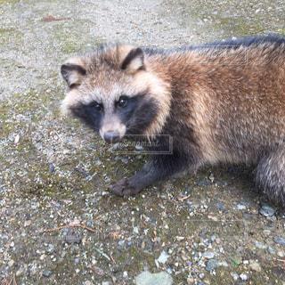 野生動物の写真・画像素材[357893]
