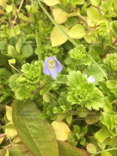 花の写真・画像素材[363010]