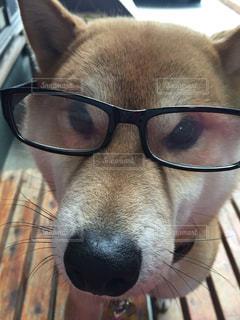 メガネがの写真・画像素材[365940]
