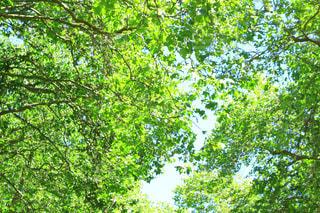 公園の写真・画像素材[356407]