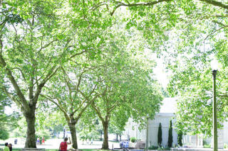 公園の写真・画像素材[356408]