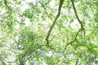 公園の写真・画像素材[356410]