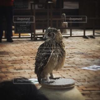 鳥の写真・画像素材[363170]