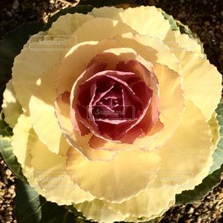花の写真・画像素材[428305]
