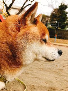犬の写真・画像素材[357251]