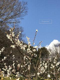春の写真・画像素材[357962]