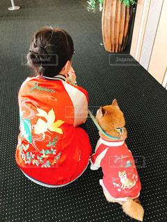 犬の写真・画像素材[361029]