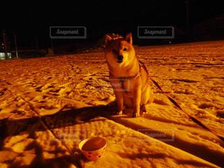 犬の写真・画像素材[361640]