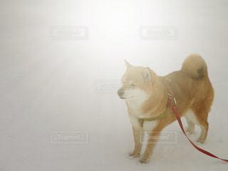 犬の写真・画像素材[361649]