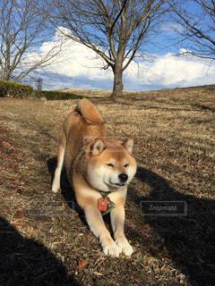 犬の写真・画像素材[361650]