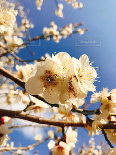 春 - No.361826