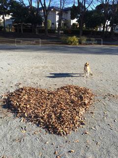 犬の写真・画像素材[368635]