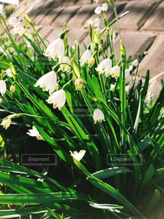 花の写真・画像素材[376630]