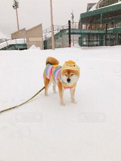 犬の写真・画像素材[382742]