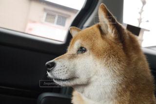 犬の写真・画像素材[384191]