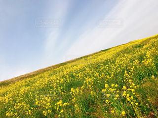 自然の写真・画像素材[387739]